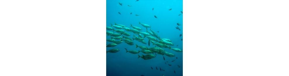 魚油/鯊烯/青口