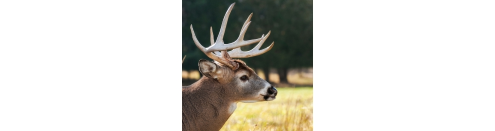 DEER PRODUCTS