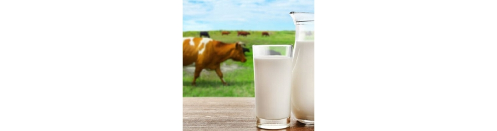 COLOSTRUM/DAIRY PRODUCTS